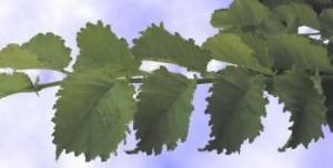 Lutece Foliage Andre Briant