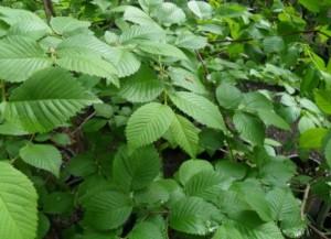 Morfeo Spring Foliage