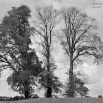 Blisworth dead elms quotation 14 (Shakespeare)